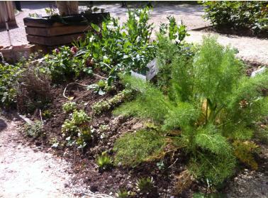 photo du jardin potager en juin